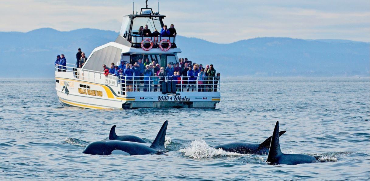 Walvissen spotten in Brits-Columbia